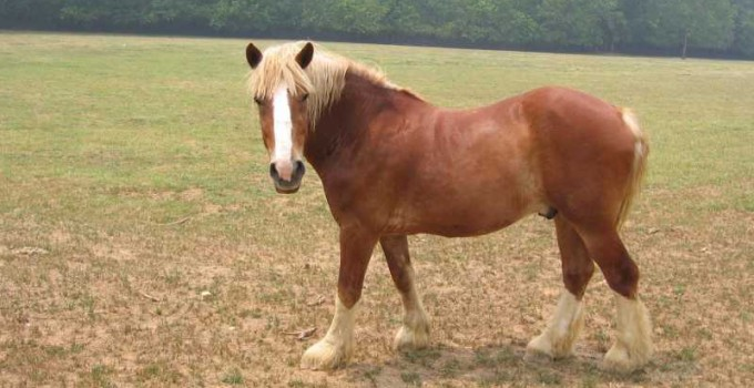 Nombre para caballo