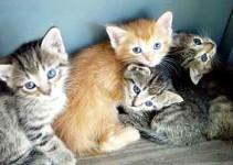 Nombre para gatos