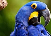 Nombre para pájaros
