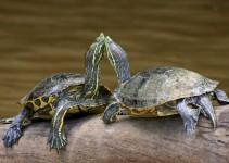 Nombre para tortugas