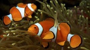 Nombre para un pez