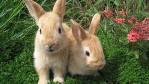 nombre para conejos