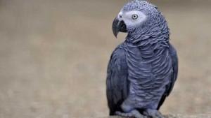 Nombre para aves machos