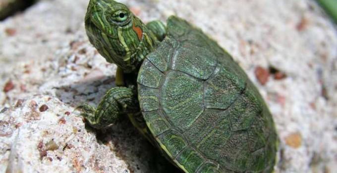 Nombres unisex para tortugas