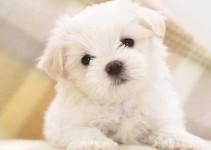 Nombres para perros tiernos