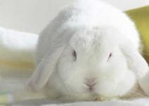 Nombres unisex para conejos
