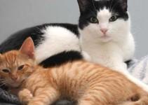 nombre de gatos hembra