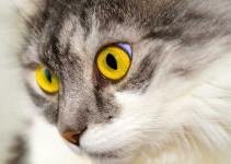 Nombre para gatos machos