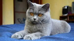 Nombre para gato gris