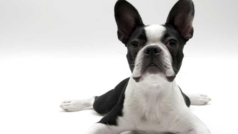Nombres de razas de perros pequeños