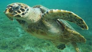 Nombres de tortugas marinas