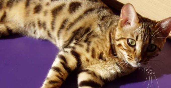 Nombres egipcios para gatos