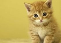 Nombres tiernos para gatos y su origen