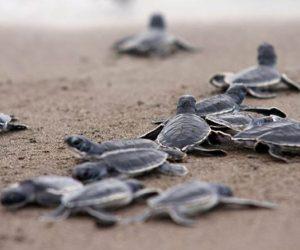 nombre-para-tortugas-marinas