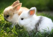 nombres de conejos enanos
