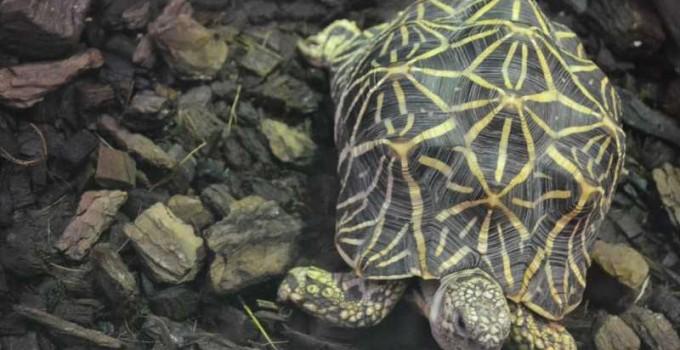 Tortugas de tierra especies
