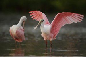 nombre-de-aves