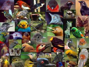 nombres-diversos-para-aves