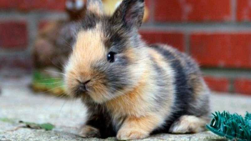 Conejos como mascotas para niños