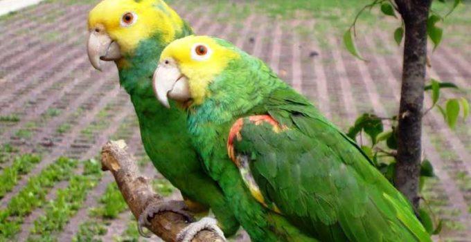 Nombre para aves hembras populares