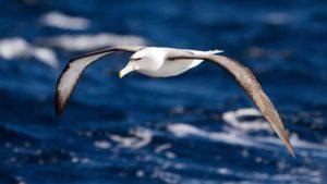 Nombres de aves marinas