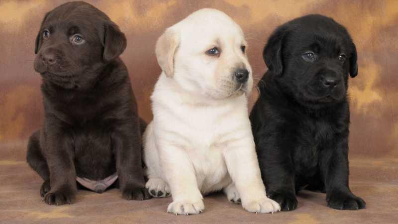 Nombres de razas de perros cariñosas