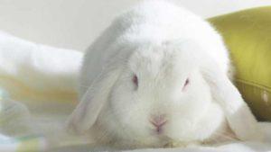 Nombres para conejas blancas