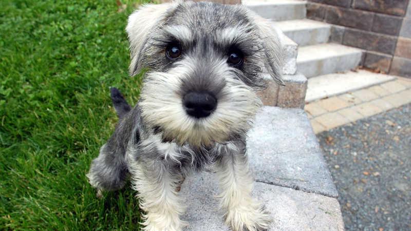 Nombres para perros machos pequeños