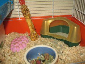 jaula-del-hamster